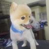 Bon Bon's Doggie Stylez Inc